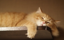 lazy-cat